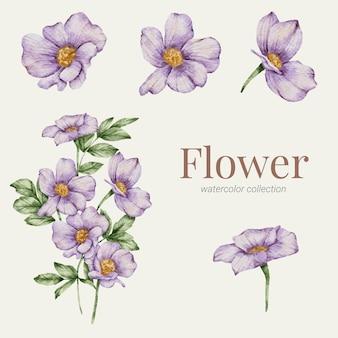 꽃 요소 수채화 컬렉션