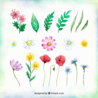 Коллекция цветочных элементов с различными типами