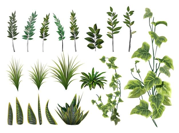 ユーカリの枝と白い背景の上のハーブで設定された花の緑。植物コレクション。ベクトルイラスト。