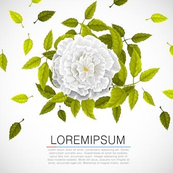 明るい背景に白い花と葉を持つ花柄