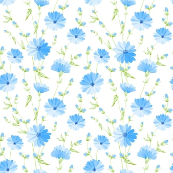 Floral seamless pattern. blooming chicory on white background.