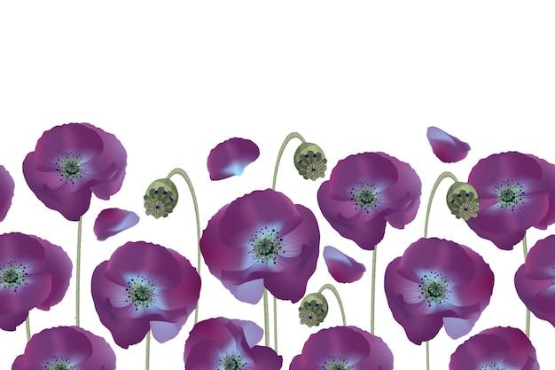 Цветочный фон, граница. фиолетовые маки, изолированные на белом фоне. нежные цветы.