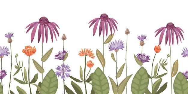 花のシームレスなパターン、コーンフラワーケンタウレア、エキナセア、キンセンカとの装飾的な境界線。紫、紫、オレンジ色の花、白い背景で隔離の緑の葉。