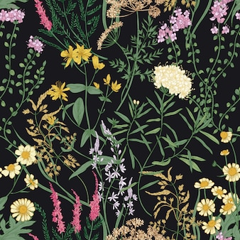 Цветочный фон с красивыми дикими цветущими цветами на черном