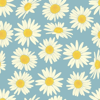Floral seamless pattern with camomile.