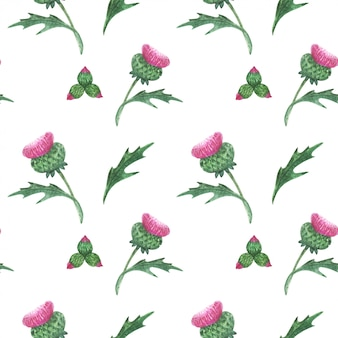 Floral seamless pattern with scottish wild thistle