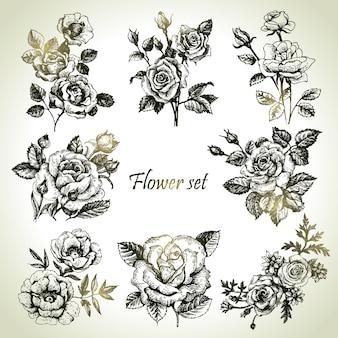 꽃 세트입니다. 장미의 손으로 그린 삽화