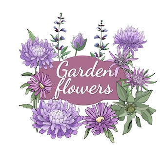 Floral set. summer and spring isolated garden flowers and herbs with aster, sage, oyster plant.