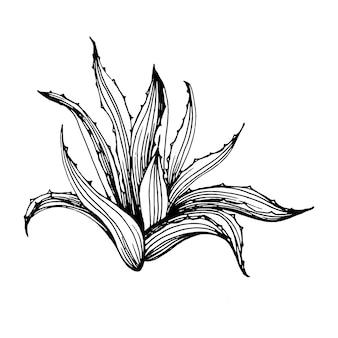 線画スタイルで非常に詳細な花の多肉植物の入れ墨