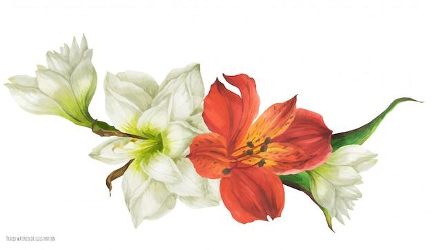 白いアマリリスと赤いアルストロメリアの花と花のビネット