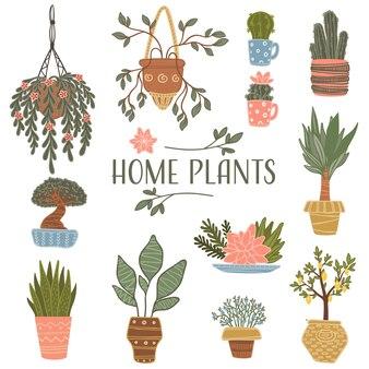 植木鉢に植えられた花の組成と花