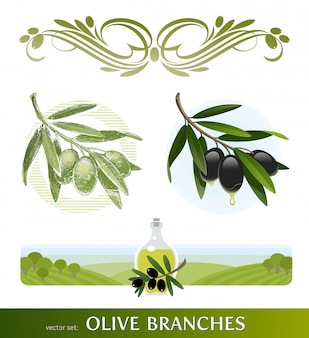 Flourishes olive branches. hand drawn olive branch.