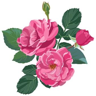 豊かなピンクのバラが咲き乱れ、やわらかい花びらとつぼみがあります。茎と緑の葉にとげのある孤立した花。装飾的な植物学、ロマンチックな贈り物またはヴィンテージプレゼント。フラットスタイルのベクトル