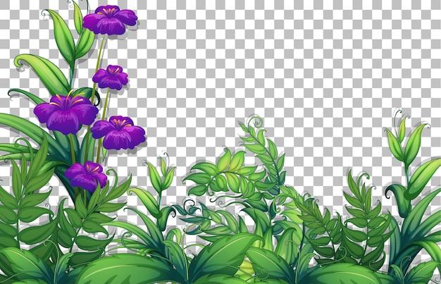 花と葉のフレームテンプレートを透明に