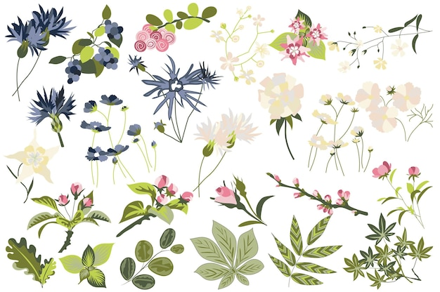 花と植物は、開花庭園と開花野花の異なるタイプの緑を設定します