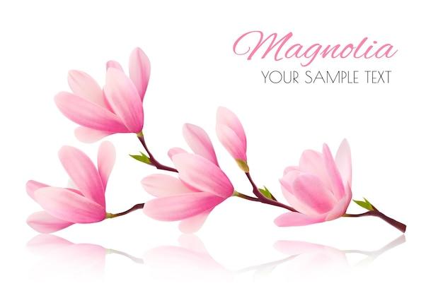 Цветочный фон с ветвью цветения розовой магнолии.