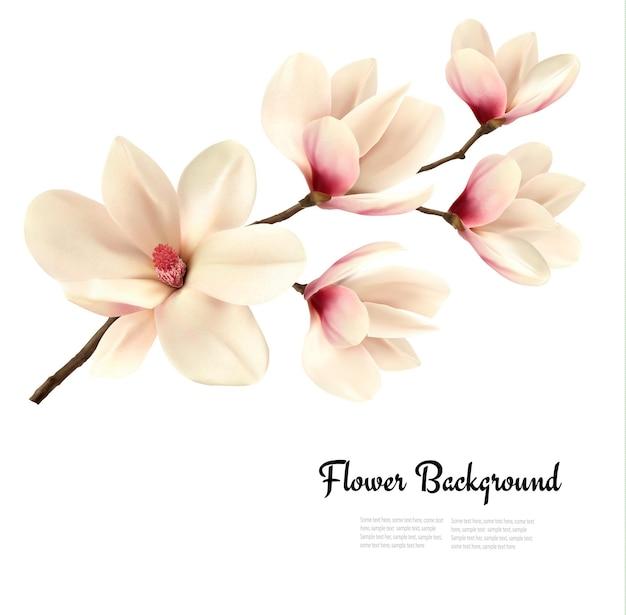 Цветочный фон с ветвью цветения белой магнолии.
