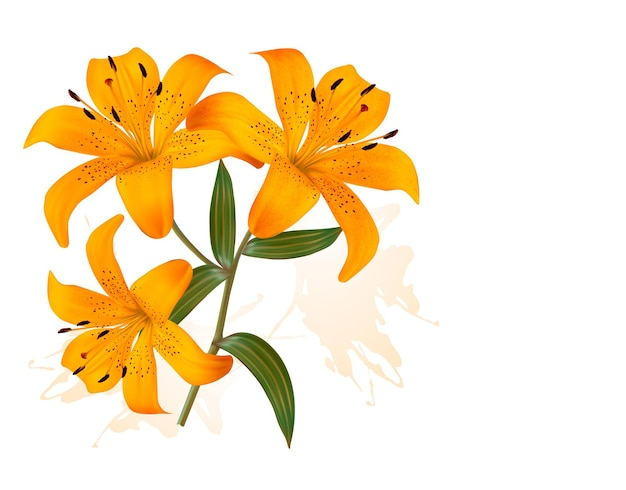 Flower background with three beautiful lilies.
