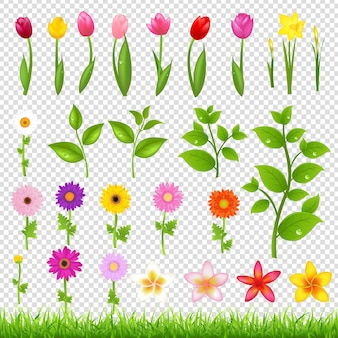 Цветок большой набор изолированных иллюстрация