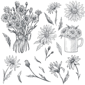 Flower bouquet in flourishing, chamomile in cup