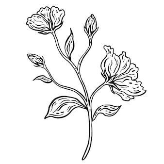 葉を持つ花の枝。手描きのベクトル図です。モノクロの黒と白のインクスケッチ。線画。白い背景で隔離。ぬりえ。