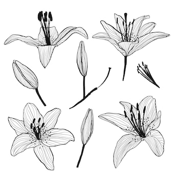 Flower buds and lilies