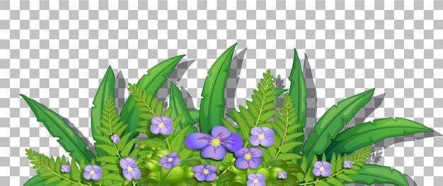 Cespuglio di fiori con foglie su sfondo trasparente