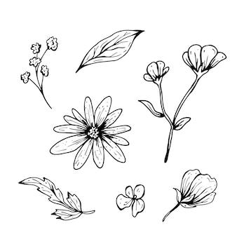 Цветочный рисунок. рисованной векторные иллюстрации. монохромный черно-белый рисунок тушью. штриховая графика. изолированные на белом фоне. раскраска.