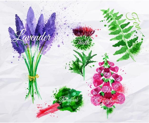 꽃 잔디 라벤더