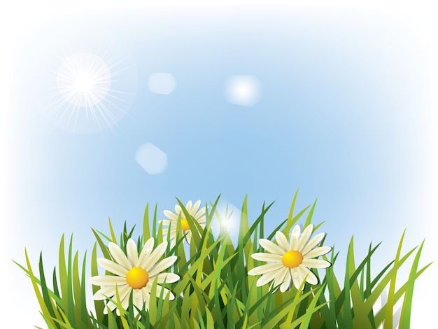 Flower in green grass and blue background