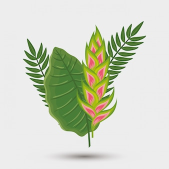 Flower heliconia with leafs isolated