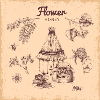Flower honey hand drawn composition