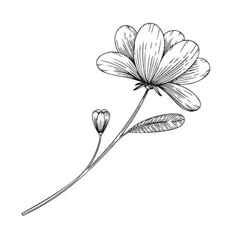 스케치 스타일의 꽃. 판타지 꽃 흰색 배경에 고립입니다. 스케치 스타일의 그림입니다.