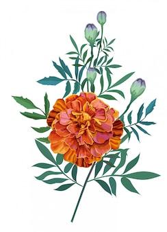 Flower orange, french marigold