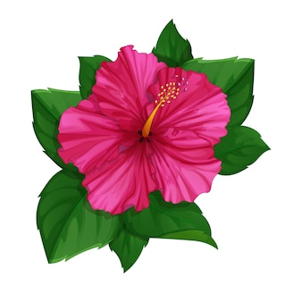 Flower of pink hibiscus with leaves.