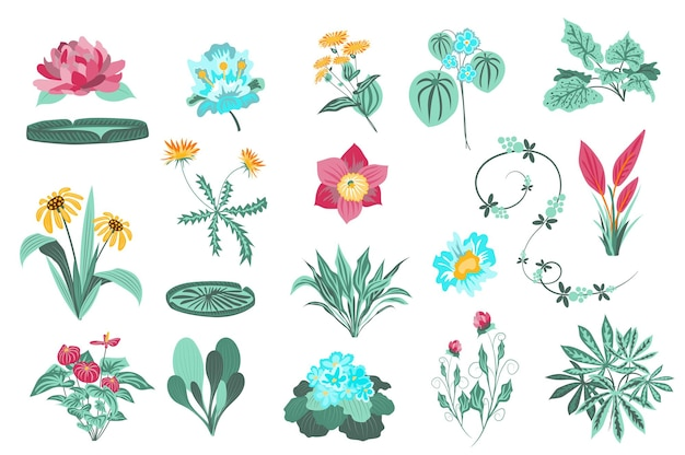 Flower and plants isolated set garden and wild foliage green leaves blooming wildflowers