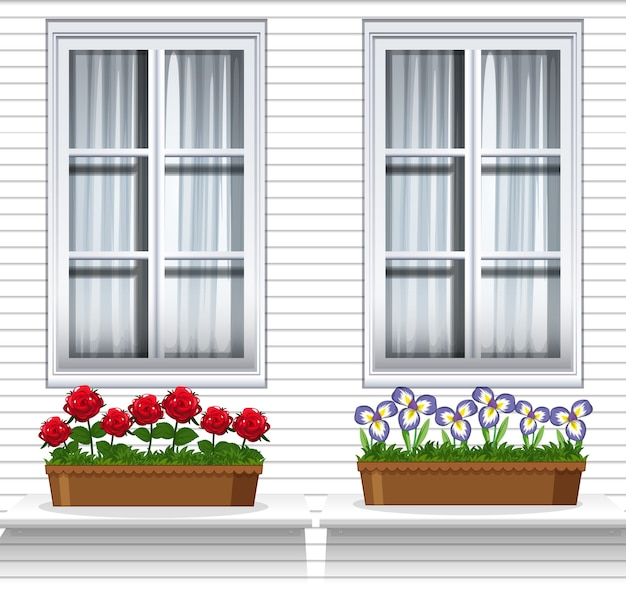 Цветочные растения возле окна