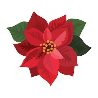 Цветочная пуансеттия. мультфильм рождественский цветок. иллюстрация цветущего растения на белом фоне.