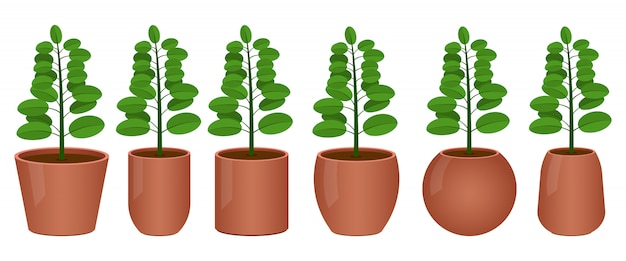 Flower pot  design illustration isolated on white background