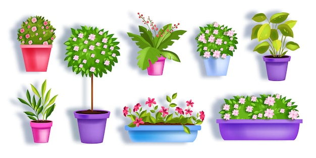 Flower pots garden spring set with blooming house plants, blossom tree, green leaves, seedlings.