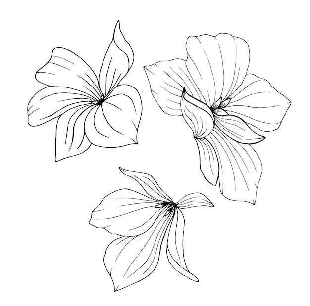 Цветочный набор из трех элементов для украшения. цветущие цветы для поздравительных открыток или приглашений