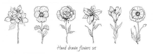 꽃 세트 장미, 양귀비, 백합, 벚꽃. 꽃 그래픽, 스케치 식물 그림. 흑백 빈티지 라인 아트. 봄 또는 여름 손으로 그린 꽃.