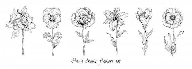 Flower set. rose, poppy, lily, cherry blossom.  floral graphic, sketch plant illustration. black and white vintage line art. spring or summer hand drawn flowers.