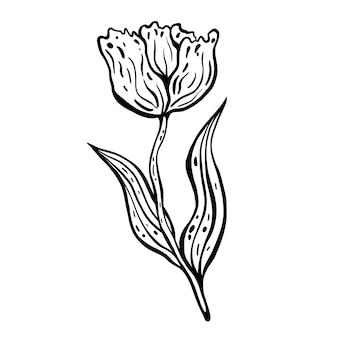 花のチューリップ。手描きのベクトル図です。モノクロの黒と白のインクスケッチ。線画。白い背景で隔離。ぬりえ。