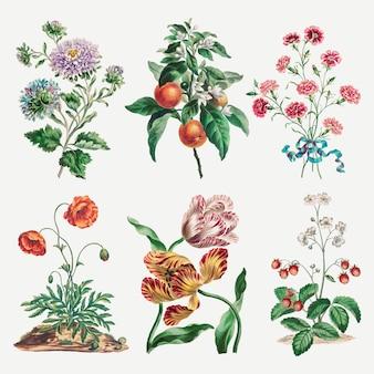 Flower vector vintage art print set, remixed from artworks by john edwards