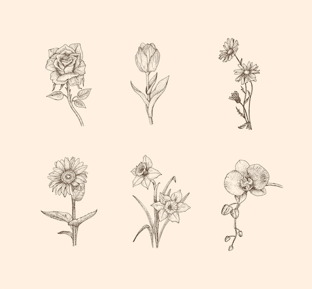 Flower vintage illustration with hand drawn style