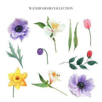 Flower watercolor set design element