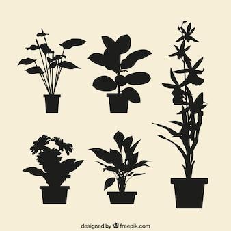 Flowerpots silhouettes