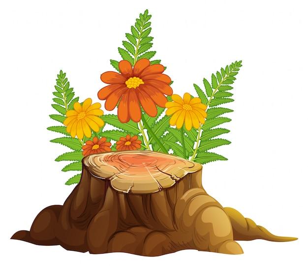 꽃과 고사리 화이트