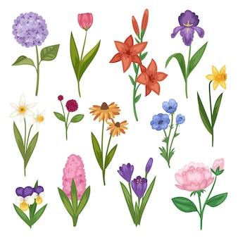 花と花の水彩画開花グリーティングカード招待状の結婚式の誕生日開花アジサイアイリス春セット白い背景のイラスト